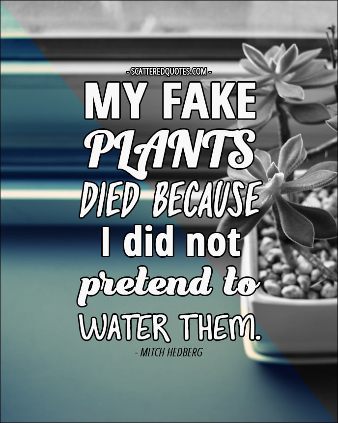 My fake plants died because I did not pretend to water them. - Mitch Hedberg